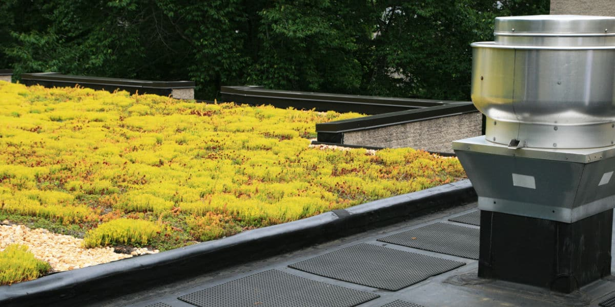 sedum op plat dak